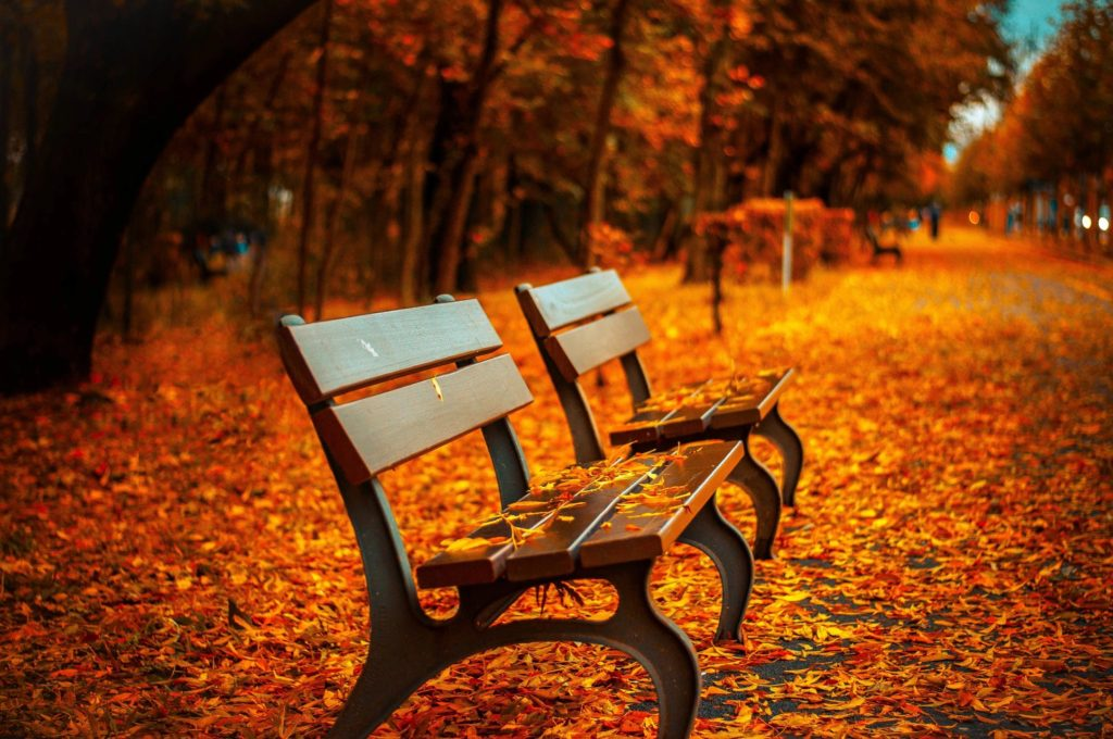 NYC park bench in fall